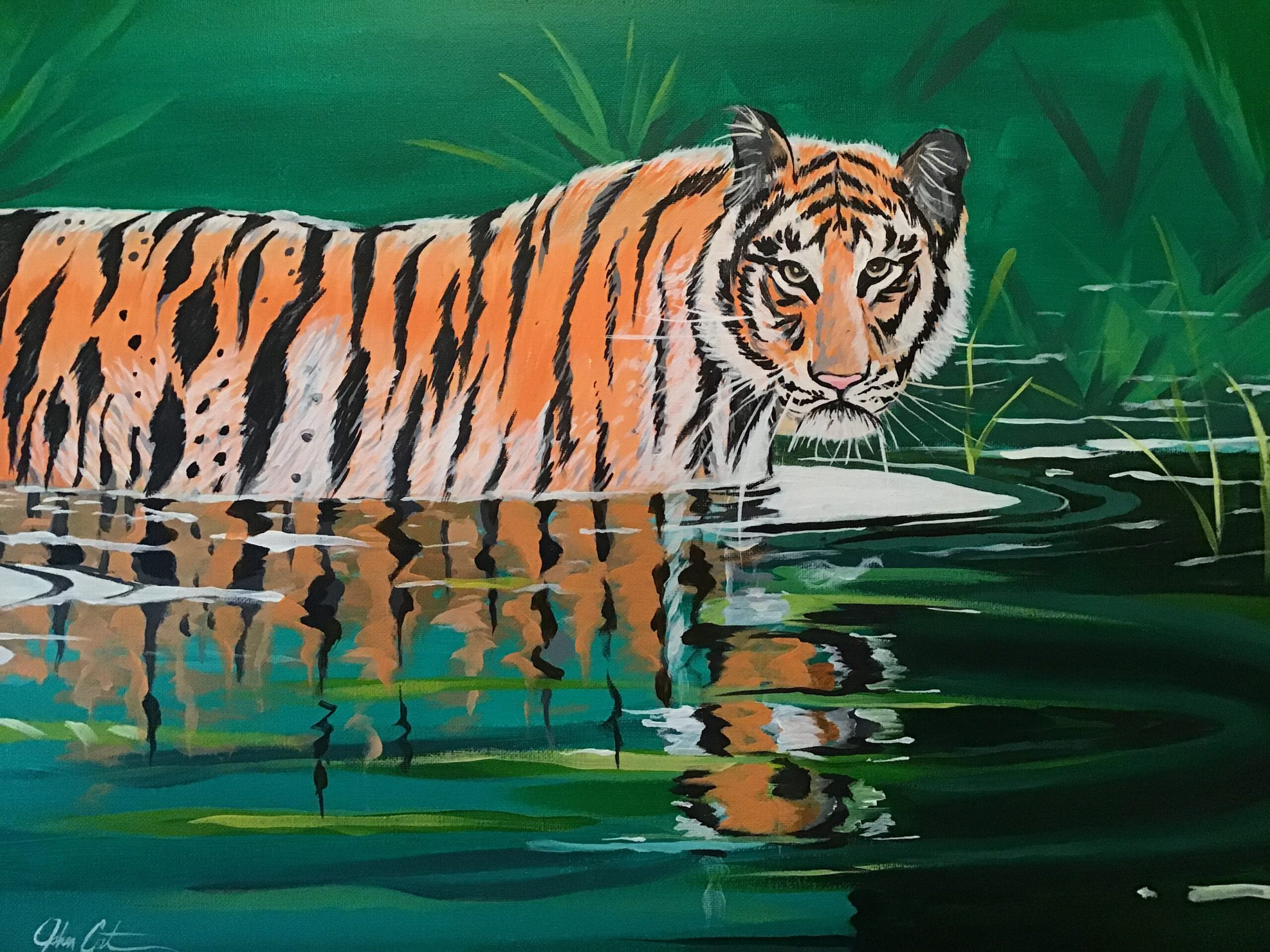 Tiger walking in water shows reflection